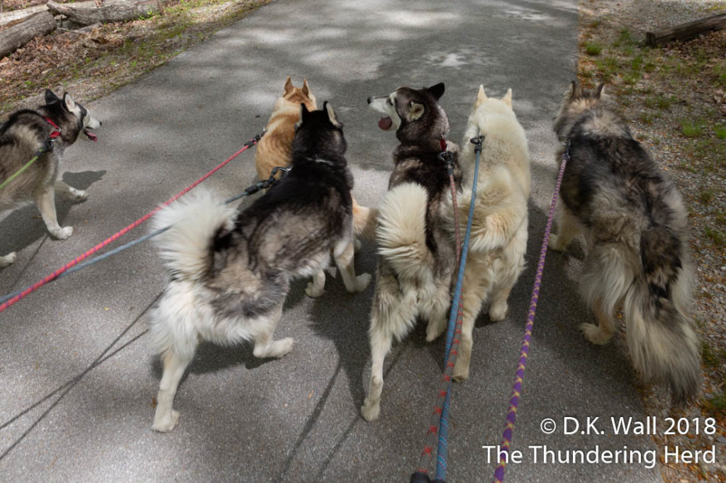 Hey, everyone, we are walking together! Awesome.