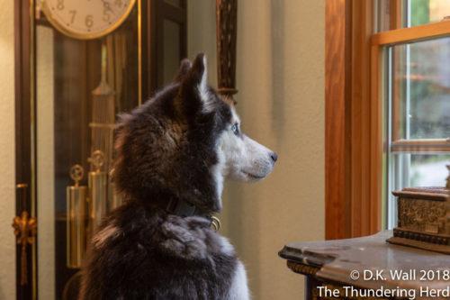 I spy some really big dogs.