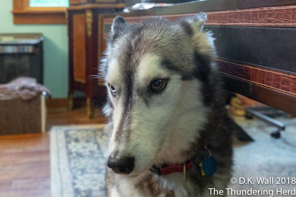 The no walk face for maximum Hu-Dad guilt.