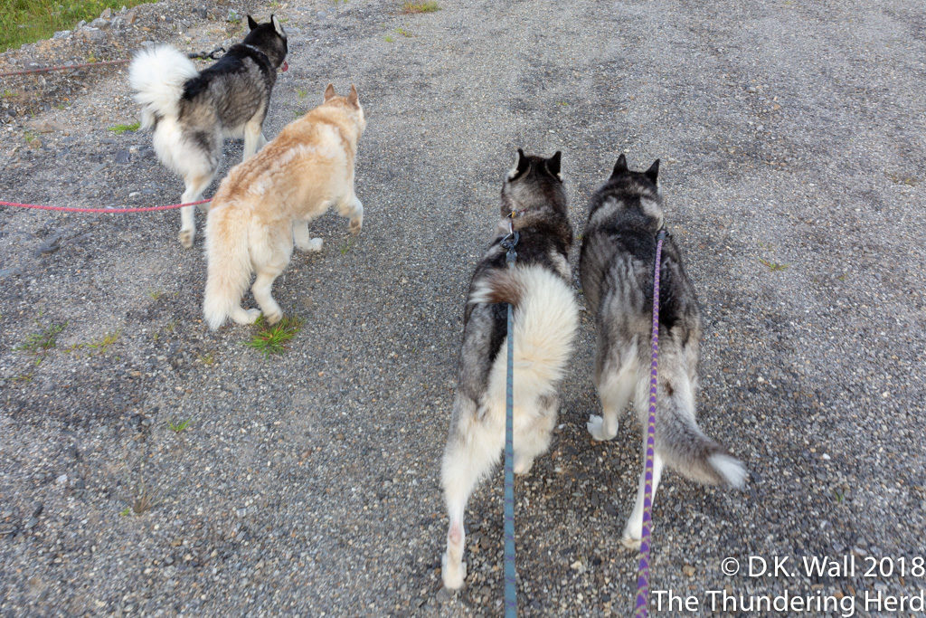 Junior Team walk.