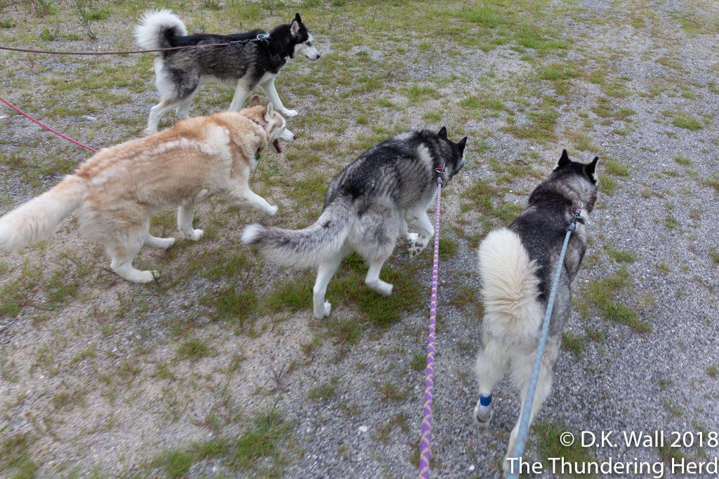 A family walk (Junior Team - Senior Team walks later)
