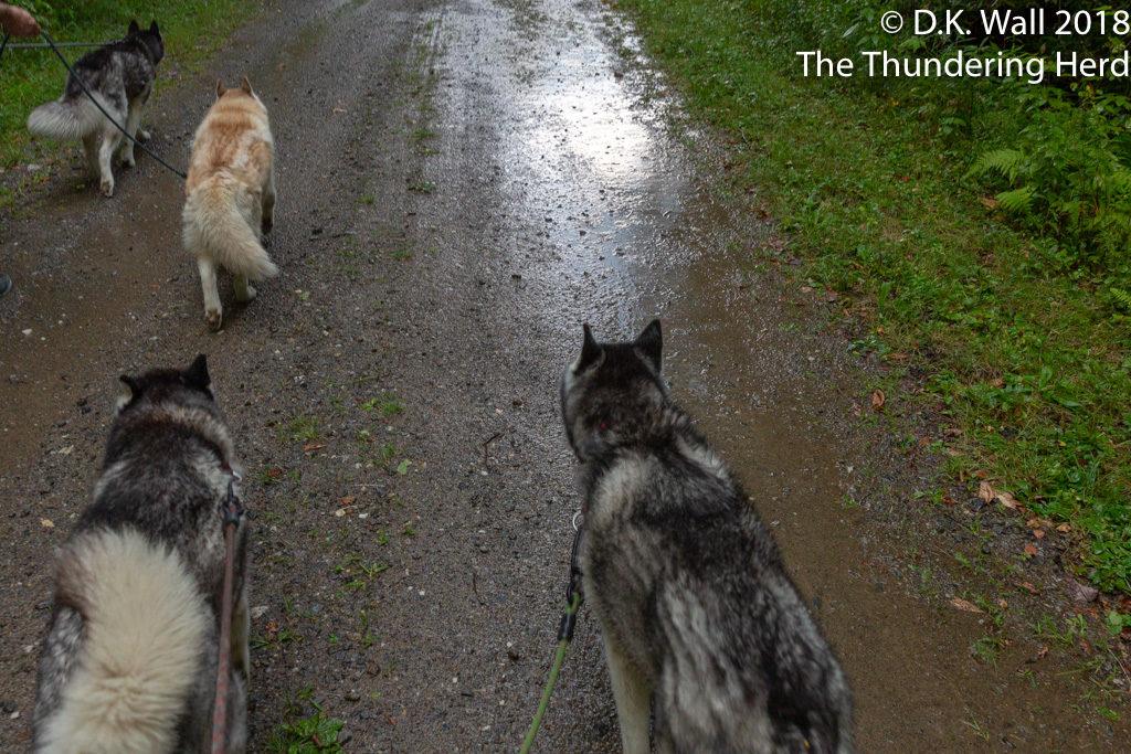 Splashing through the mud puddles.