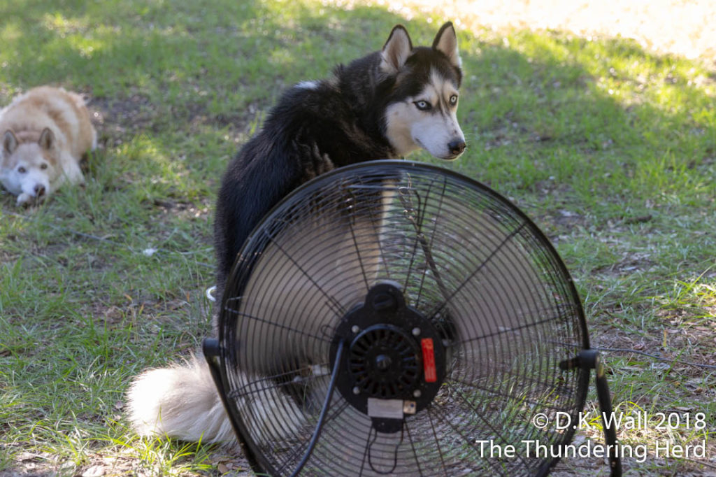Share the fan or else, bro.