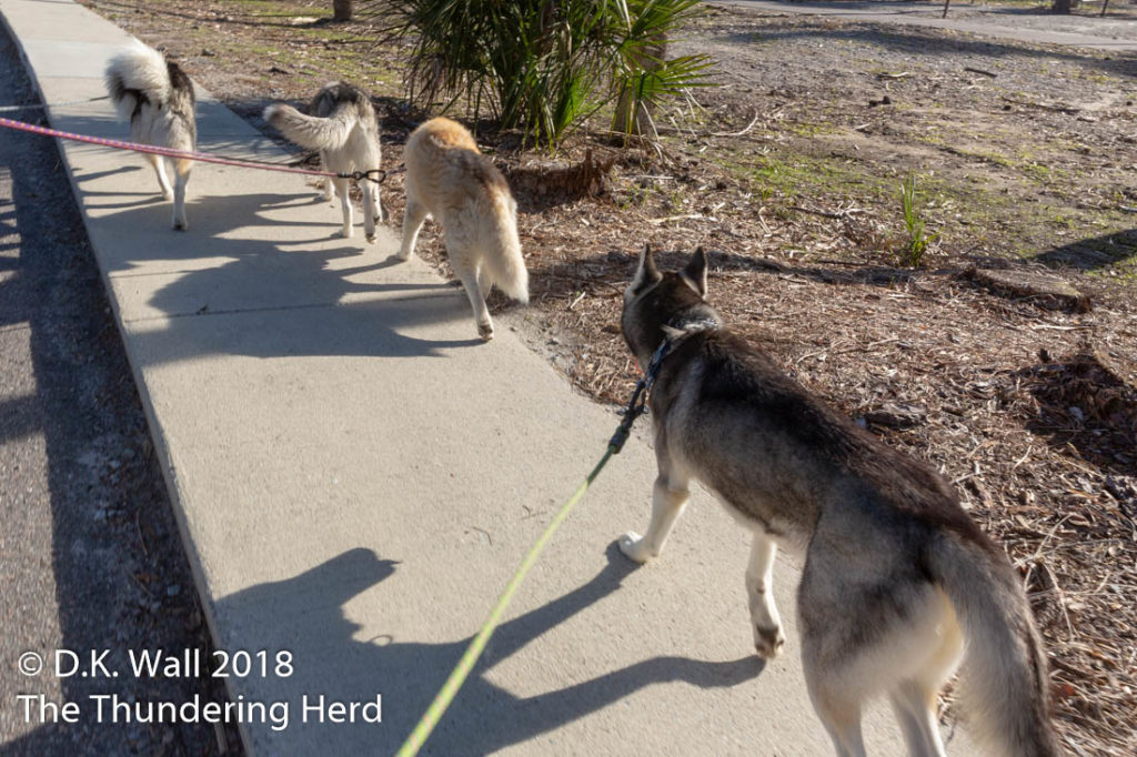 Four out of five members of The Herd say always use the sidewalk.