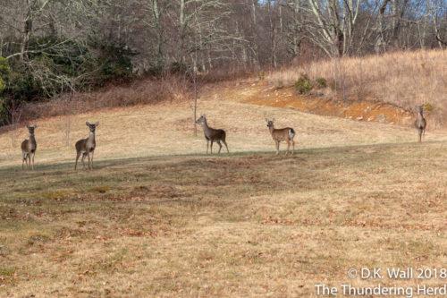 A deer herd outside Hu-Dad's study.