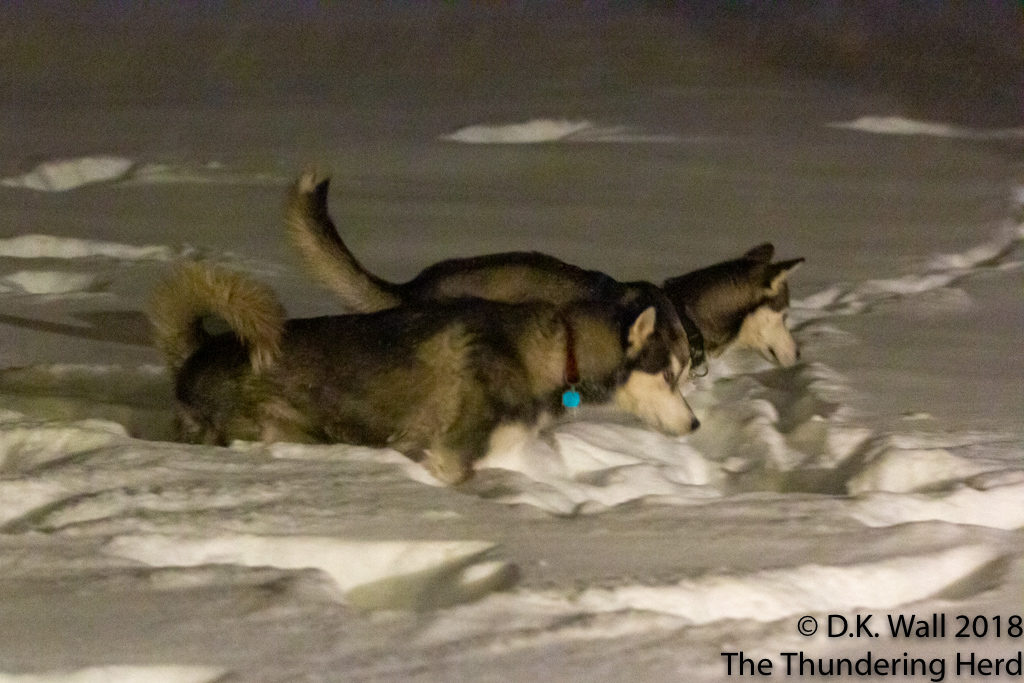 Typhoon and Roscoe during pre-dawn snow inspection.