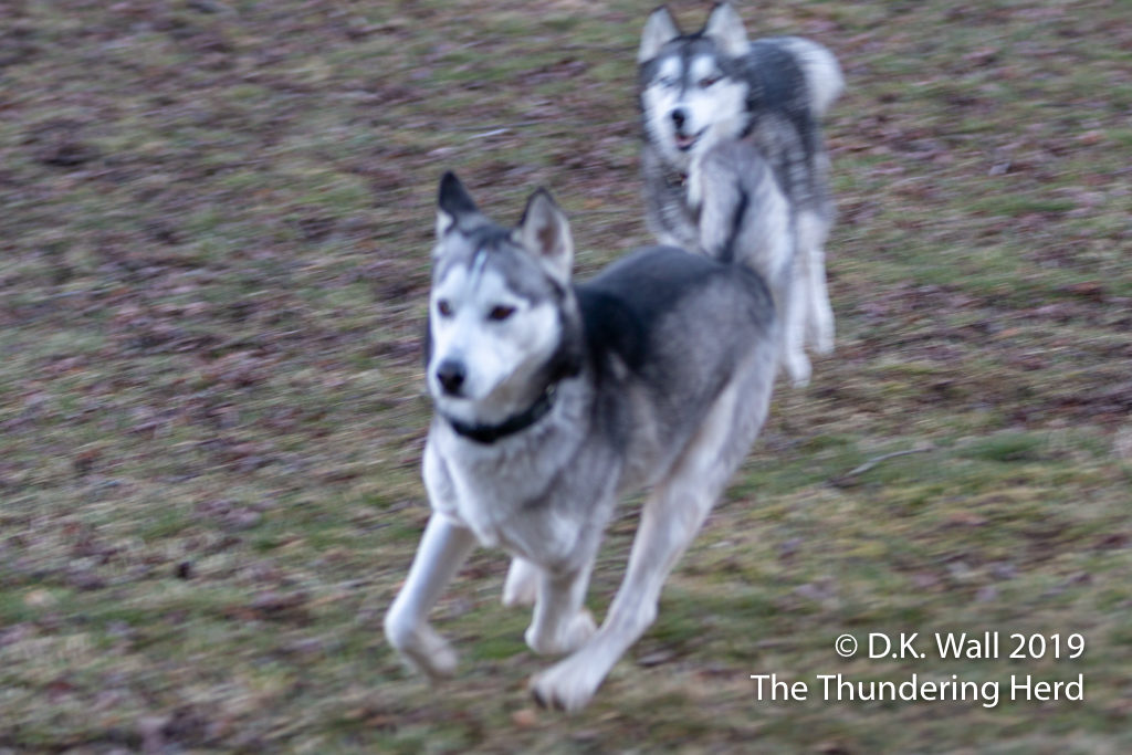 Blurry action photos are not clear, Hu-Dad.