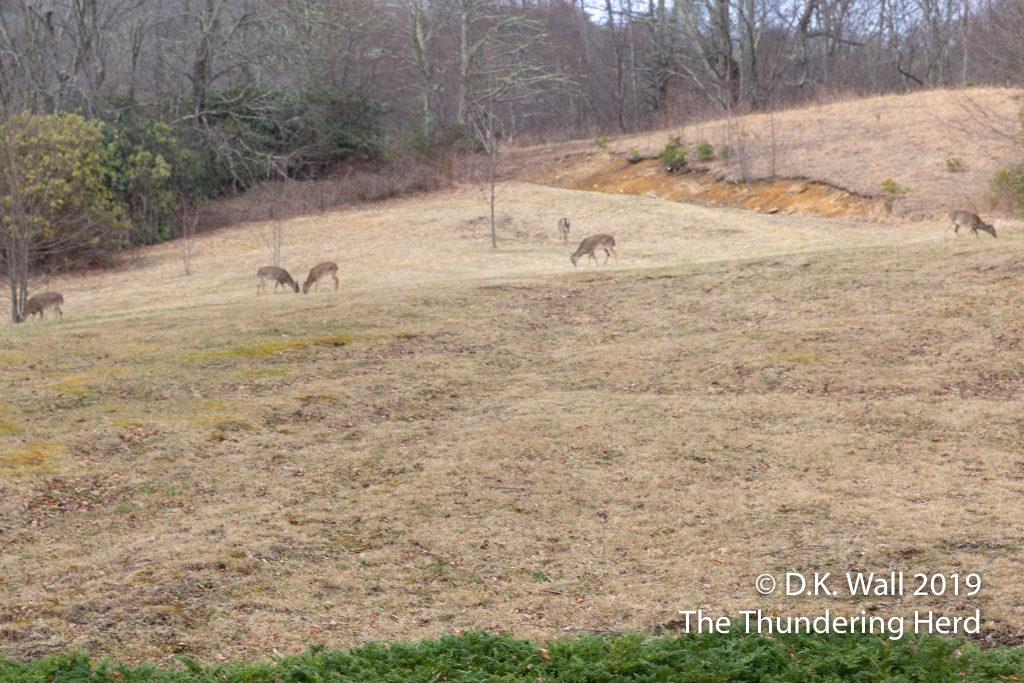 The Herd's Herd of Deer.