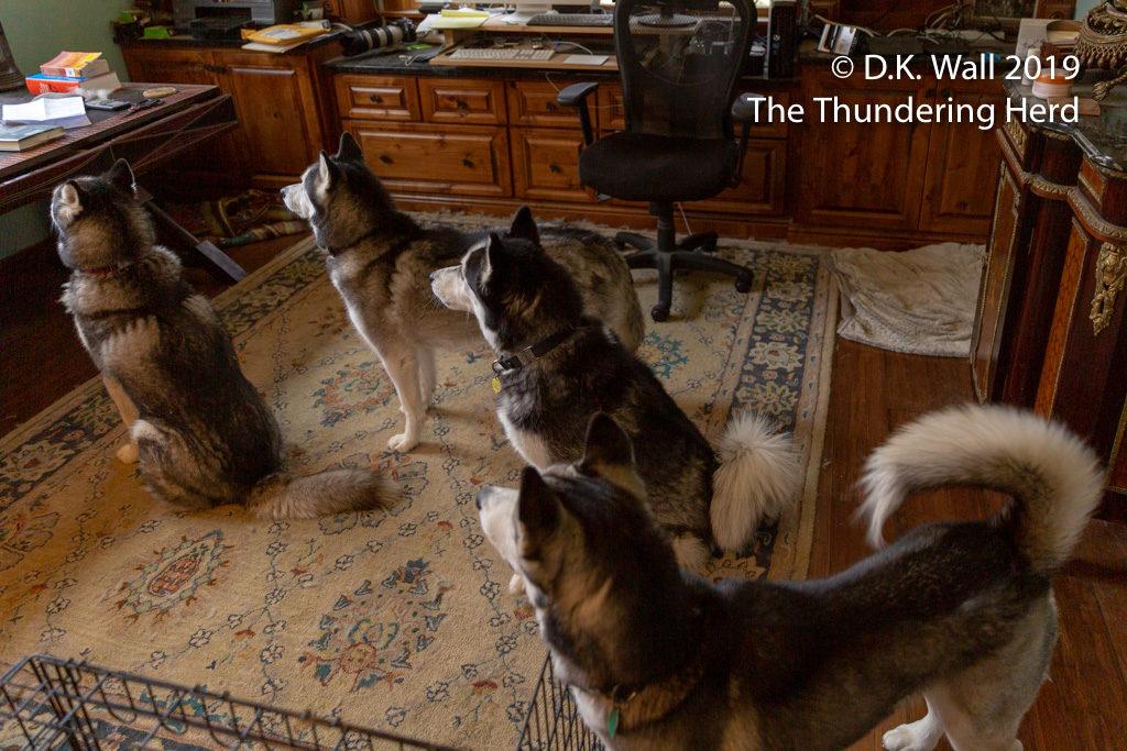 The boys are enthralled. (Typhoon, Frankie, Landon, Roscoe).