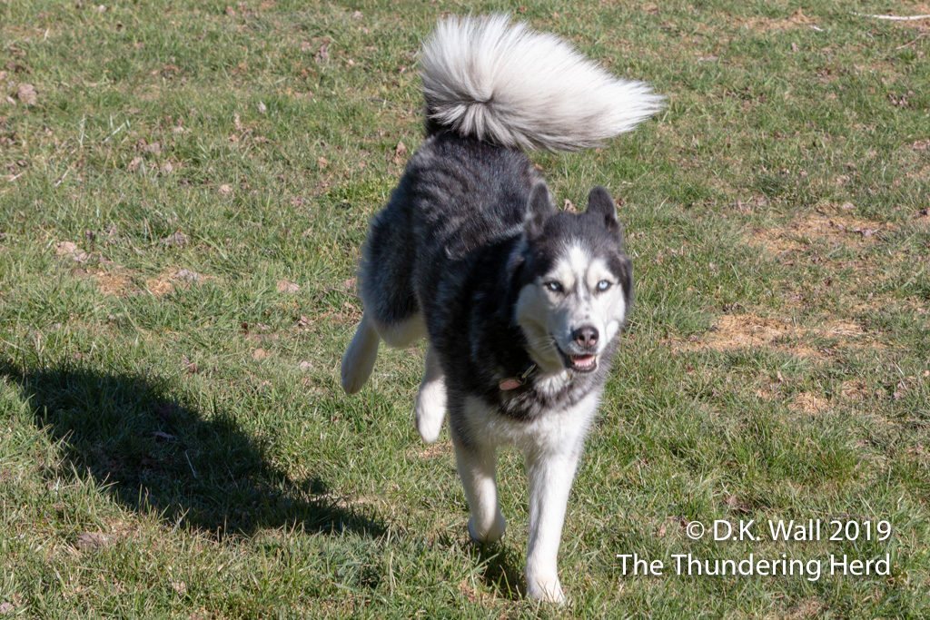 And that big ol' fluffy tail waves in the breeze.