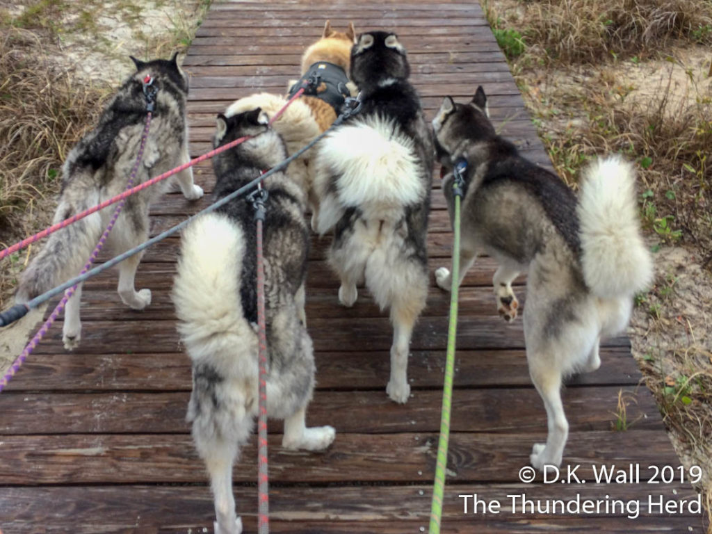 A family walk along a wooden trail.