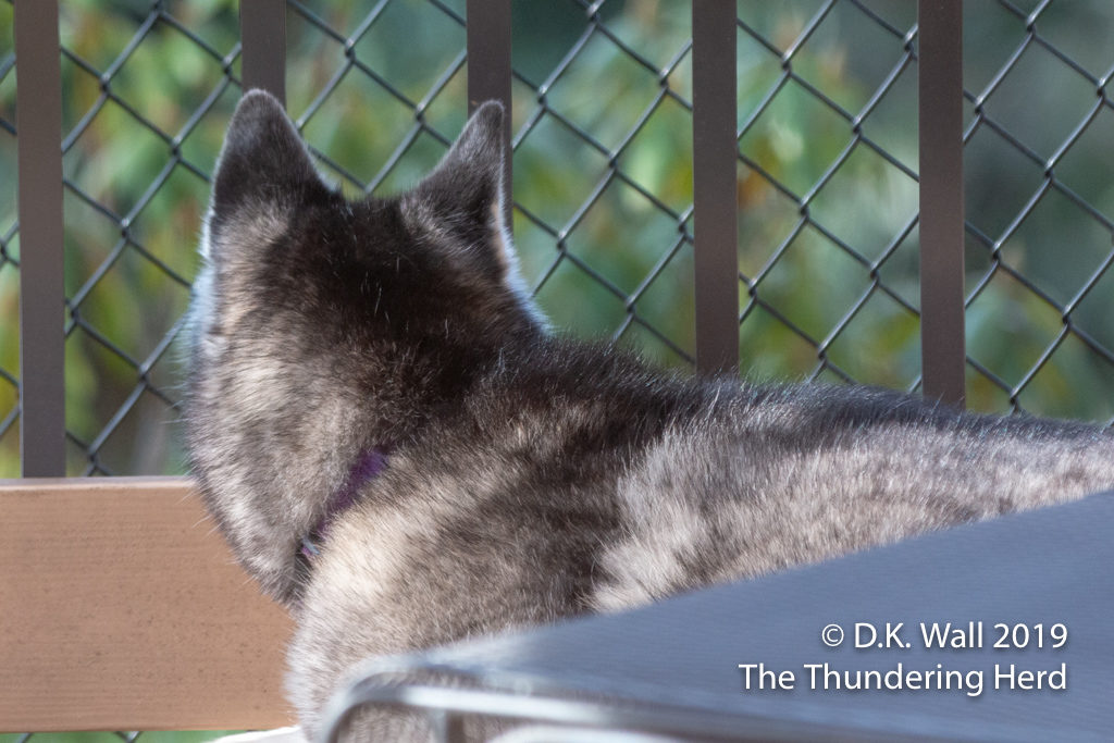 Frankie has reclaimed in observation deck since the nice weather has resumed.