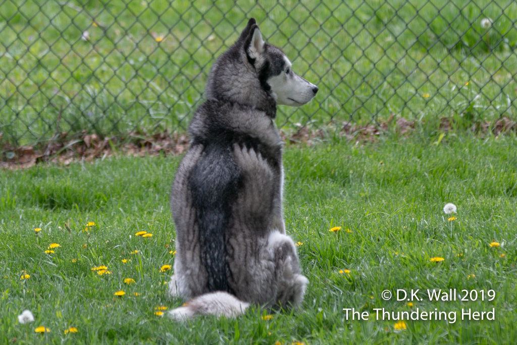 The Little Prince sitting in the backyard by himself.