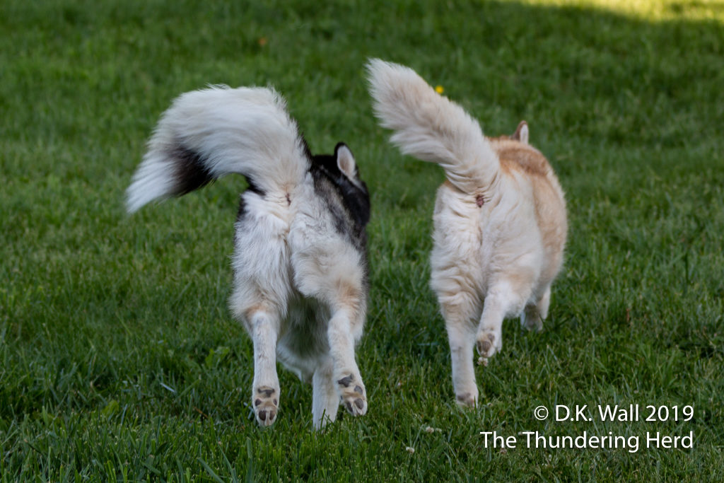 The racing rematch begins and fluffy tails are flying.