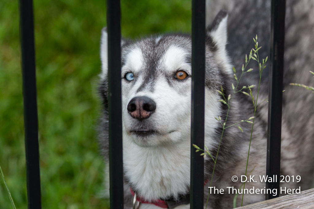 Our resident delinquent, His Haughtiness Little Prince Typhoon Phooey, behind bars.