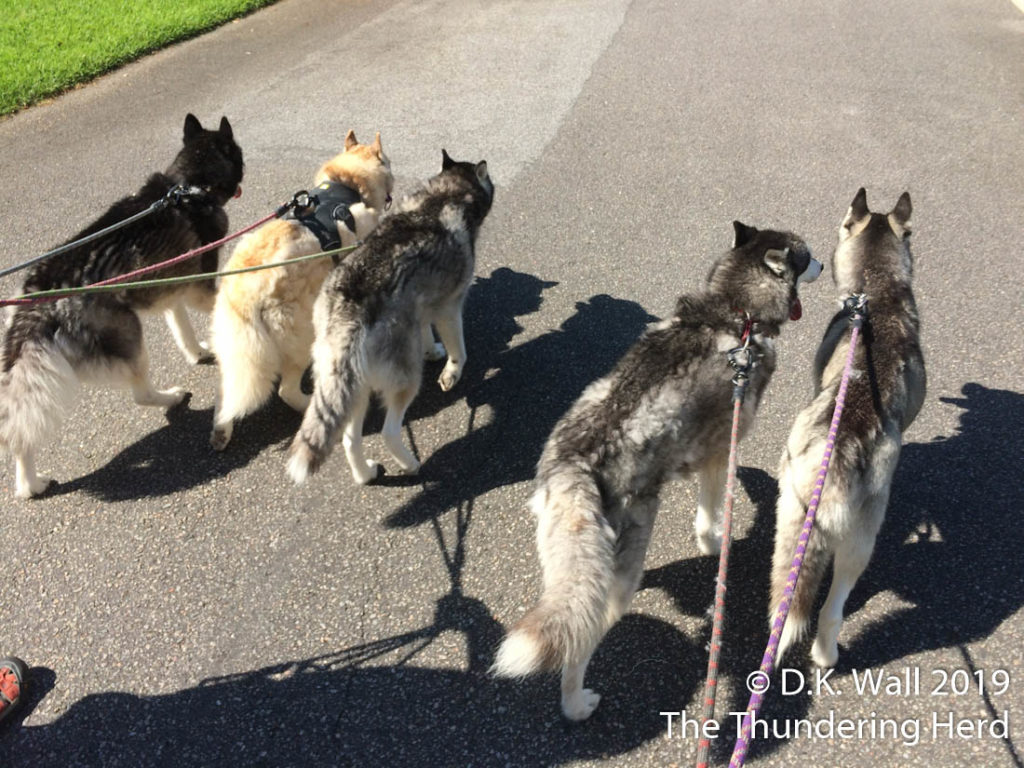 Summer Family Walk