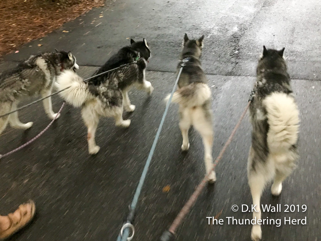 The boys—and only the boys—get an extra walk.