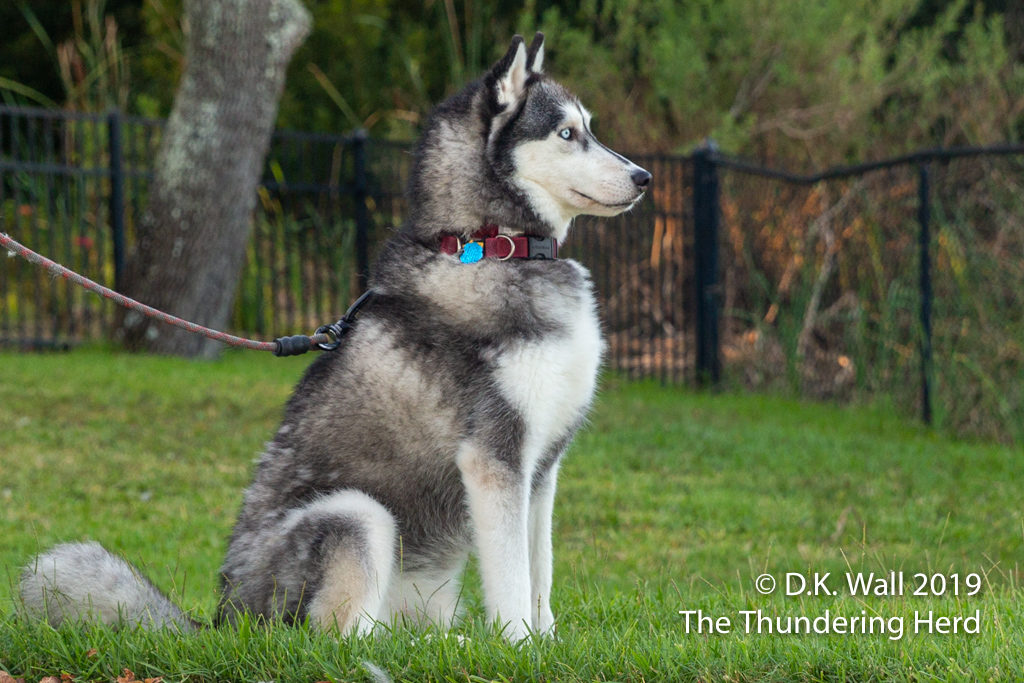 His Haughtiness Little Prince Typhoon Phooey on guard duty.