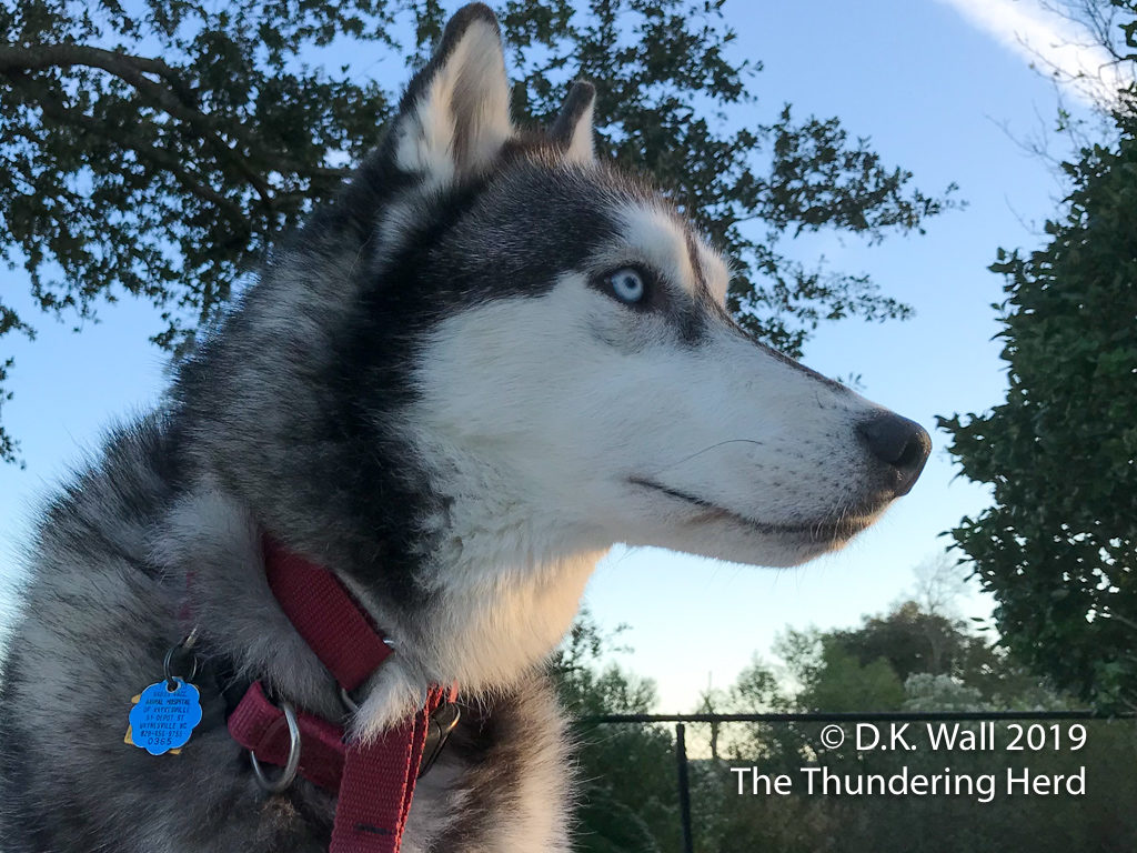 Typhoon's artsy modeling - looking pensive and handsome.