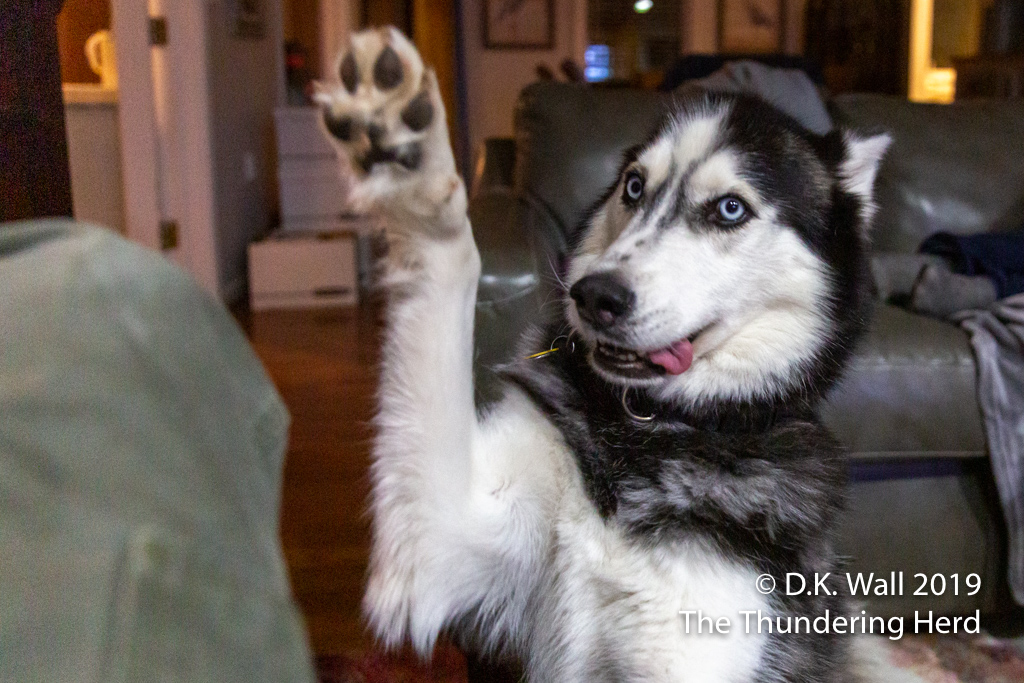 Give me Five, Hu-Dad.