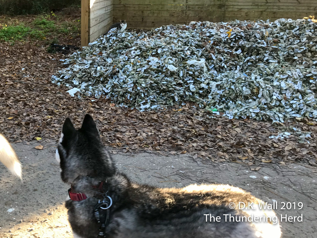 Typhoon scanning for wildlife in the woods behind the oyster shells.