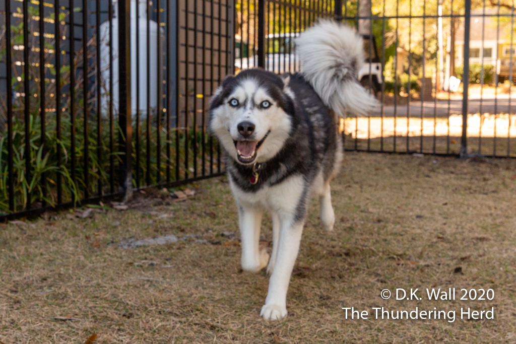 A smiling Landon happy to run about the yard
