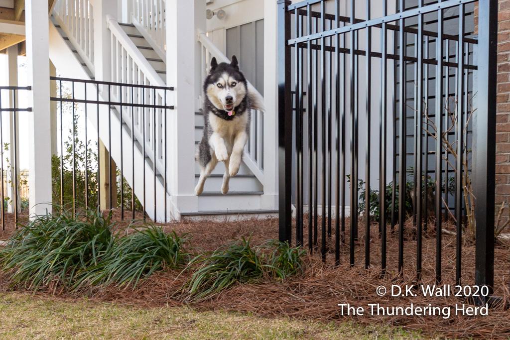 Landon (aka Boom Boom) makes a soaring entrance befitting his nickname
