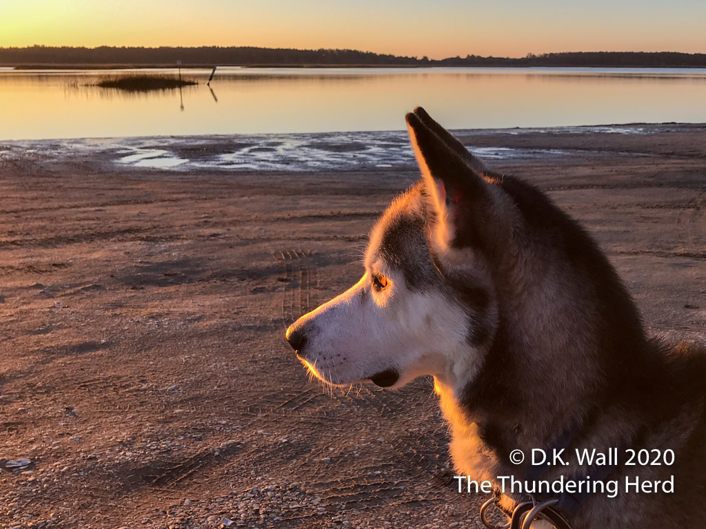 Roscoe thinks the sunrise is beautiful (and the seagull should come closer).