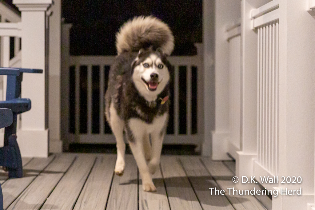 That giant fluffy tail is wagging