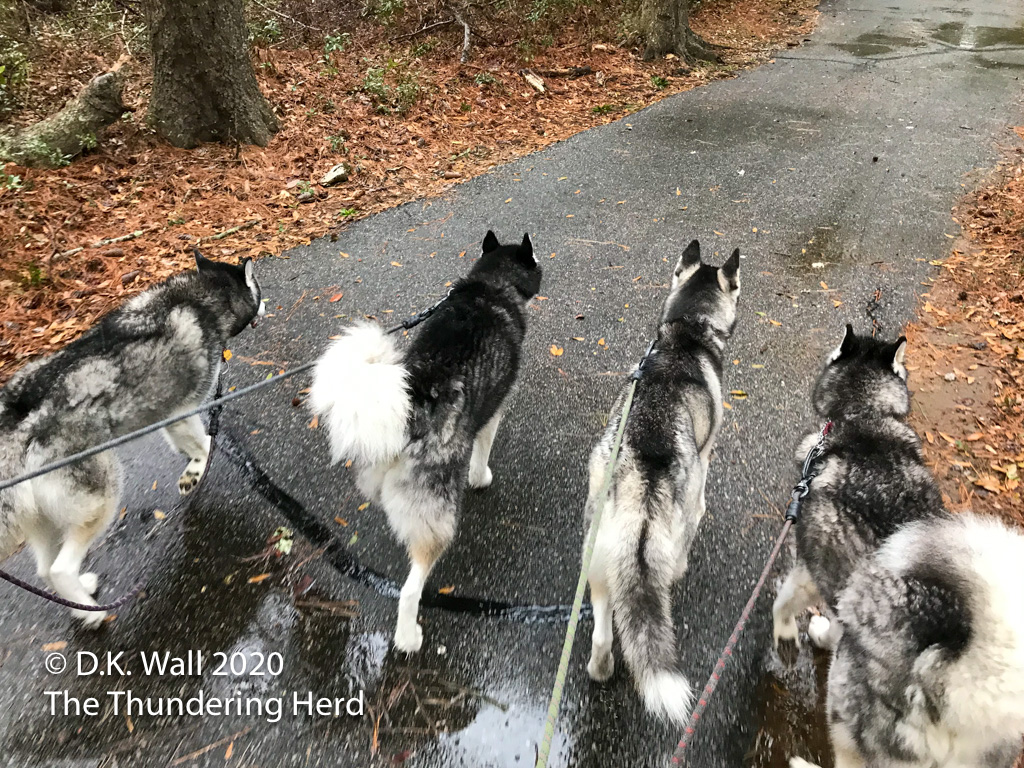 Wet walking woofs (or is that woos?)