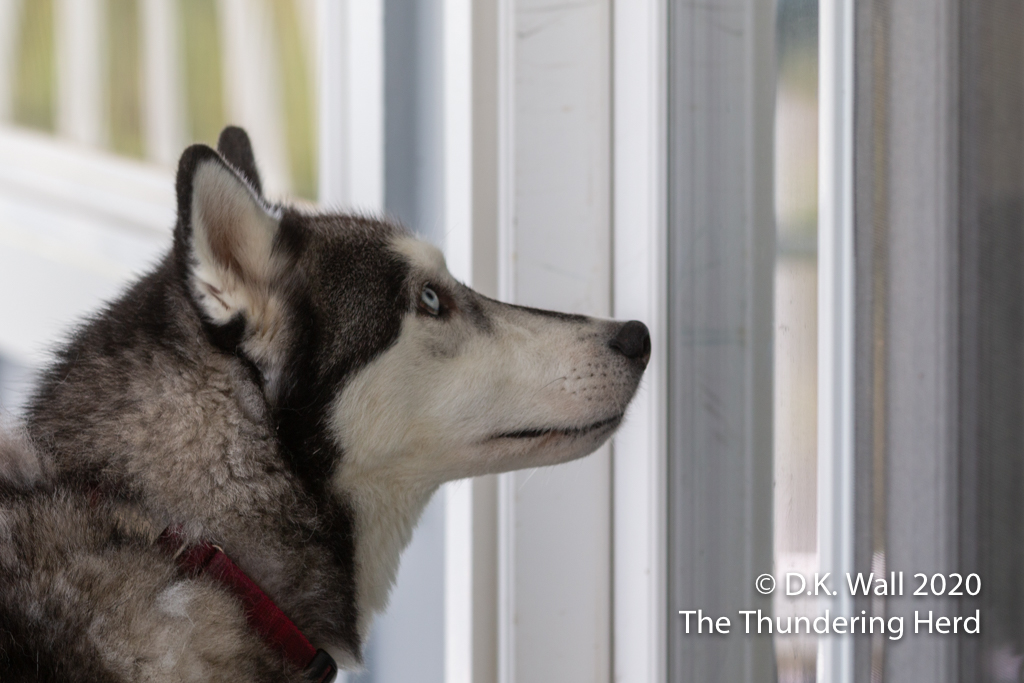 Hey, Hu-Dad, let me in so I can go out