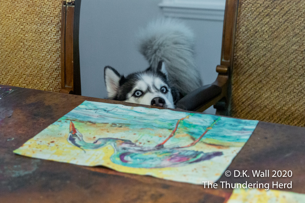 Cleaning the table after the human meals