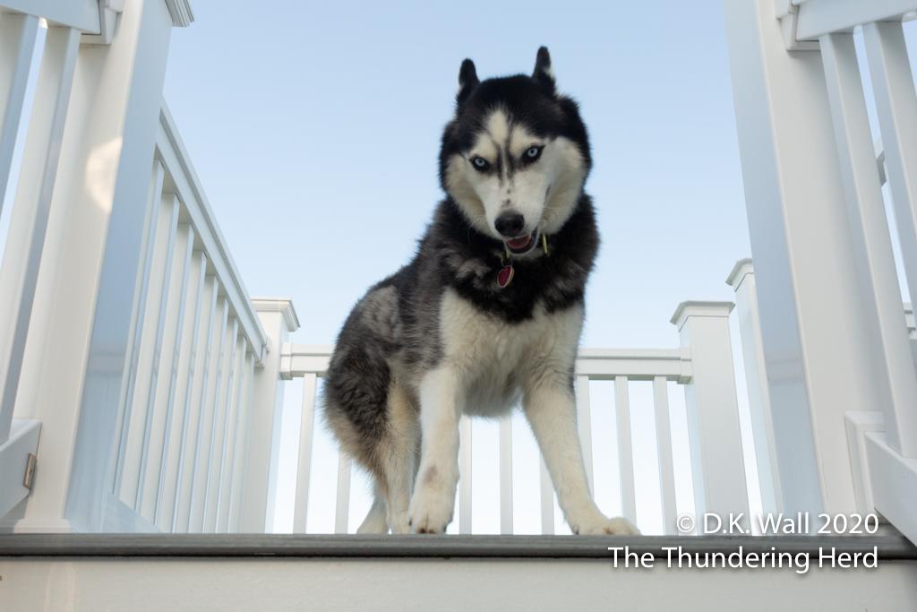 I beat you up the steps, Hu-Dad.