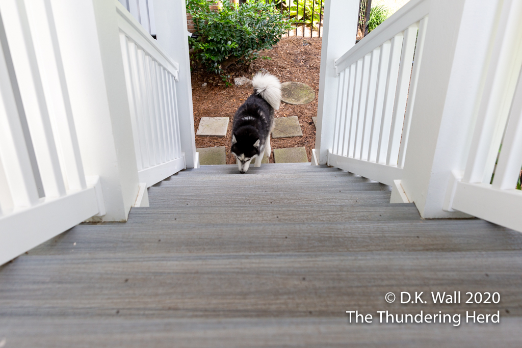 The first clue this wasn't going as planned—Landon found something interesting to sniff on the very first step,