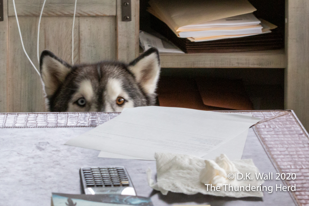 What lurks beneath the desk and spies leftovers?