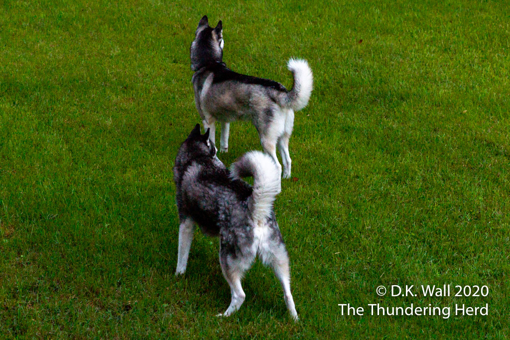 The Typhoon Roscoe Squirrel Security Services