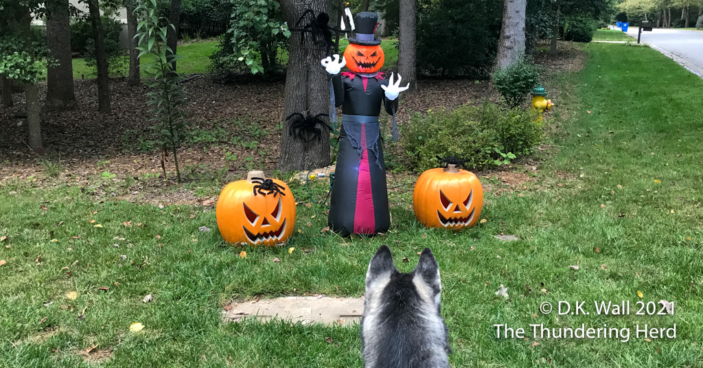 Roscoe checking out a new neighbor in this spooky time of year